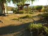 Fallen Branches From the Cactus Garden Eucalyptus
