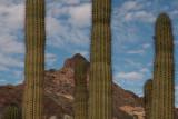 Organ Pipe Cactus National Monument 02-24-08