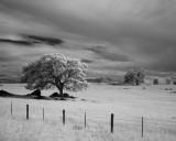 Merced Pasture