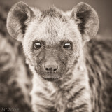 Africa in Black and White - Baby Hyenna
