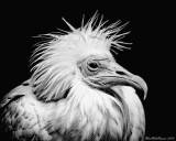 Feathers with a stange face