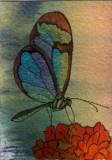 Iridescent Butterfly   2-09