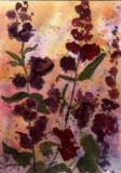 Purple Flowers   7-09