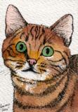 Here Kitty   8-10