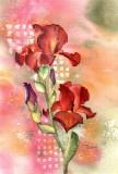 Iris, watercolor - 7 x 11     9-12