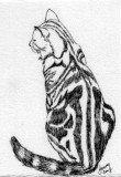 Tiger 2-08