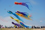 Berkeley Kite Festival - 2010