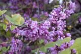 Hama april 2009 8352.jpg