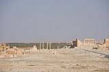 Palmyra apr 2009 0020.jpg