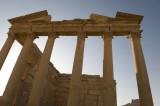 Palmyra apr 2009 0070.jpg