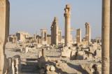 Palmyra apr 2009 0083.jpg