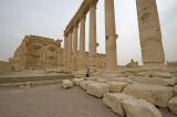 Palmyra apr 2009 0193.jpg