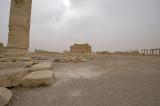 Palmyra apr 2009 0194.jpg