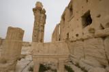 Palmyra apr 2009 0225.jpg