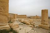 Palmyra apr 2009 0237.jpg
