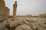 Palmyra apr 2009 0242.jpg
