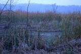 IN_Lake03.jpg