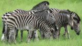 namibia__botswana_safari