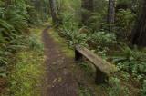 coast trail near Cove Beach, Oregon