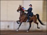 Madison Invitational Horse Show
