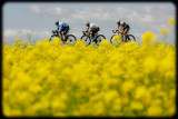 Tour of Qinghai Lake 2010