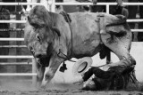 cooma rodeo 08