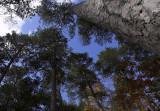 Norways towering 2.jpg