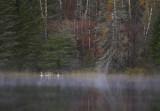Swan family Lake Itasca.jpg