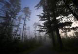 Sunrise on Pine Ridge Road.jpg
