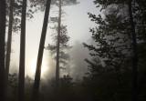 Sunrise on Pine Ridge Road V.jpg