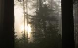 Sunrise on Pine Ridge Road VII 2.jpg