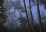 Sunrise on Pine Ridge Road III.jpg