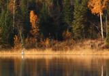 Arriving in fall splendor copy.jpg