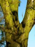 Green tree (DSCN5893.jpg)