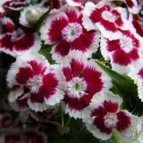 Flower study (DSCN0250.jpg)