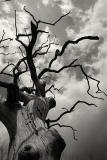 An old tree where I go fishing II (_DSC0055.jpg)