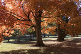 Autumn in New Harmony, Indiana