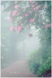 Foggy Trail.jpg