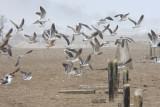 seabirds at the beach sanctuary