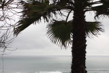 palm_ocean.jpg