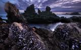 landscapeImage63copy.jpg