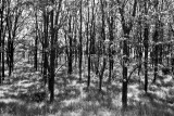 Woods Off Route 19