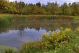 Equestrian  Pond Reflection