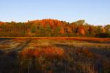 Willardshire Autumn Field