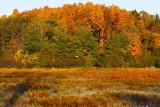Woodline  On Willardshire