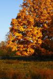 Tree On Willardshire