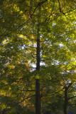 A Tree In Hamlin Park