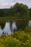 Calleri's Pond