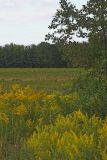 Calleri's Field