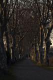 Route de Cisso